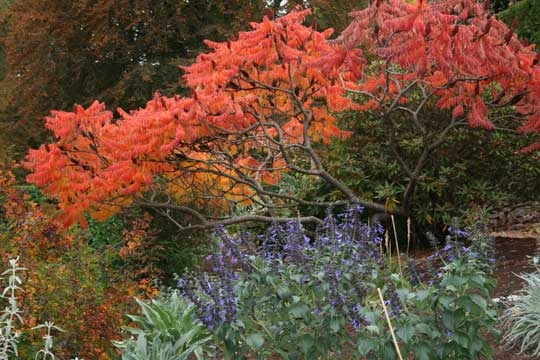 Cloudehill Garden in Autumn